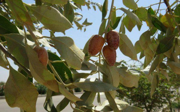 توصیه در مورد برنامه آبیاری در فصل گرم تابستان