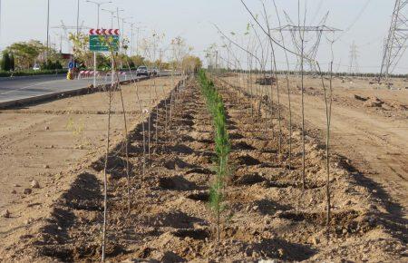 تکمیل درختکاری در بلوار اصلی پروژه کاریزلند