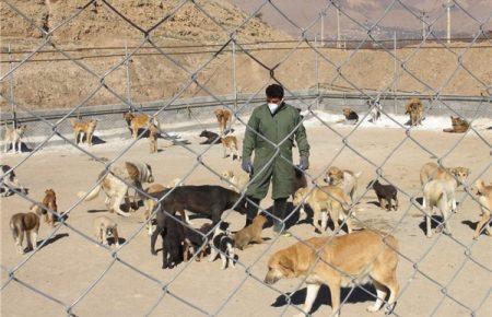 لزوم همکاری مالکین در جمع آوری سگ های ولگرد مجتمع