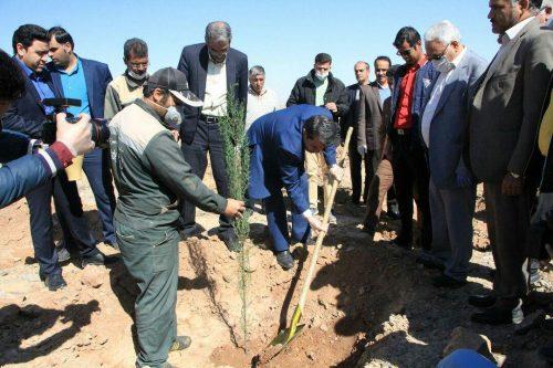 کاشت نهال توسط استاندار و مدیران ارشد استان در پارک ۱۲۰۰ هکتاری یزد/میزبانی متفاوت موسسه کوثر با رعایت نکات بهداشتی